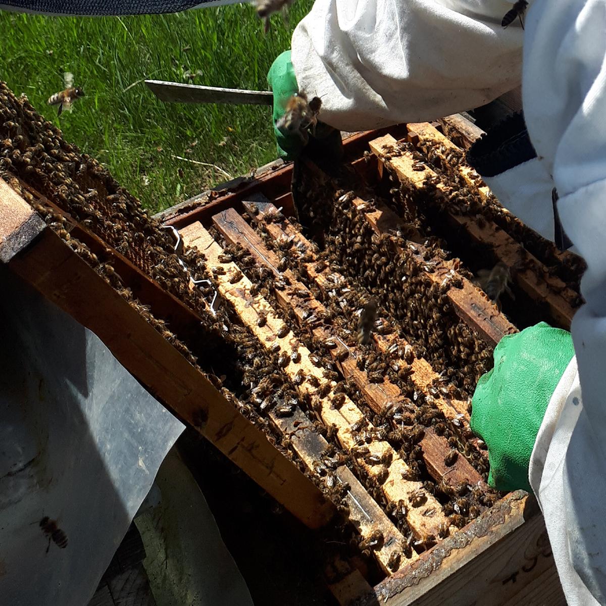 méhetetők